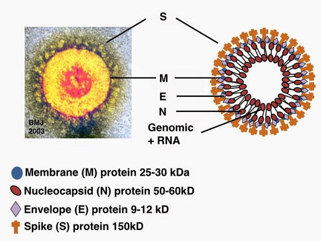 Các tế bào của vi sinh vật sau đó bị ly giải và quá trình trao đổi chất của chúng bị phá vỡ.