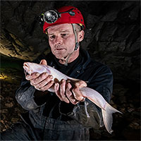 Tìm thấy loài cá kỳ lạ sống trong hang động