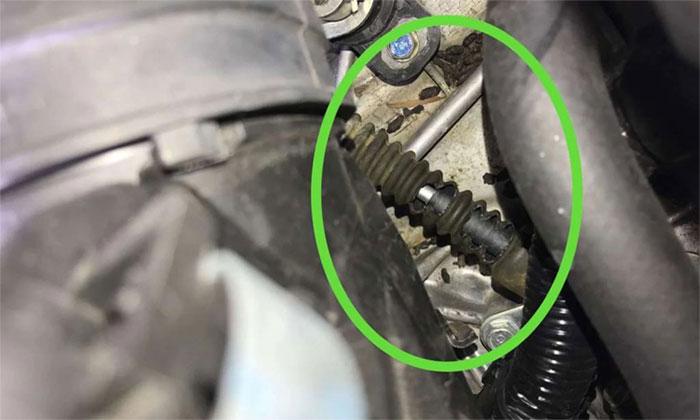 Dấu vết chuột cắn phá trong chiếc Honda Civic.