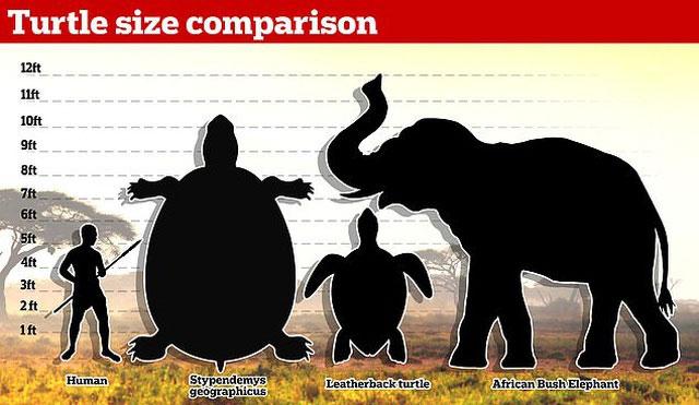 Con rùa khổng lồ có phần mai dài 8 feet.