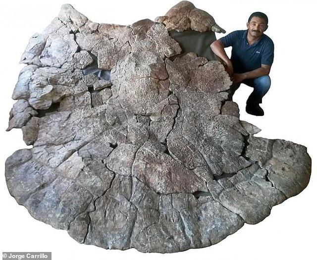 Chiếc mai khổng lồ được dùng trong chiến đấu của con rùa Stypendemys geographicus.