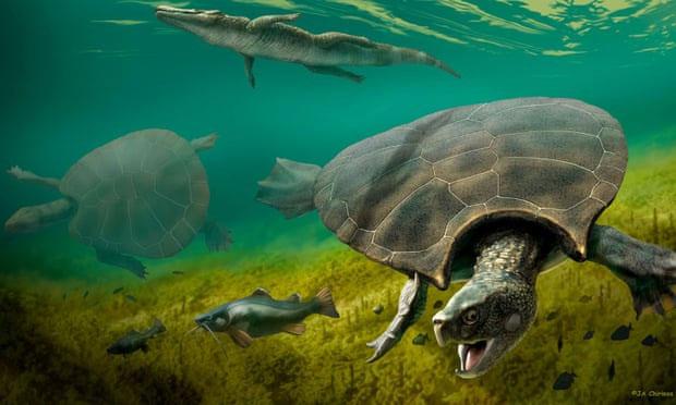 Hình vẽ mô phỏng loài rùa Stupendemys geographicus.