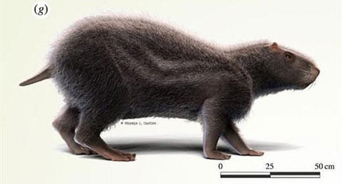 Loài chuột khổng lồ có kích thước lớn nhất từng tồn tại ở Nam Mỹ.