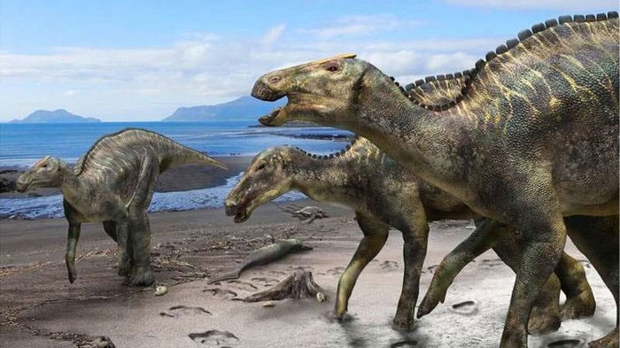 Khủng long mỏ vịt hadrosaur.