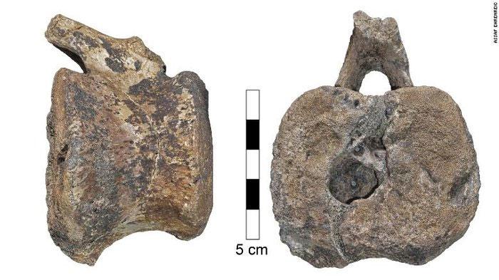 Tổn thương do hội chứng LCH để lại trên xương khủng long.