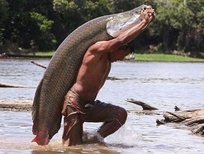 Cá Arapaima