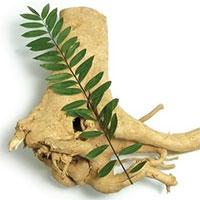 Phân lập hoạt chất chống ung thư từ rễ cây bá bệnh