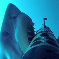 Nỗi oan của cá mập khi đứt cáp quang
