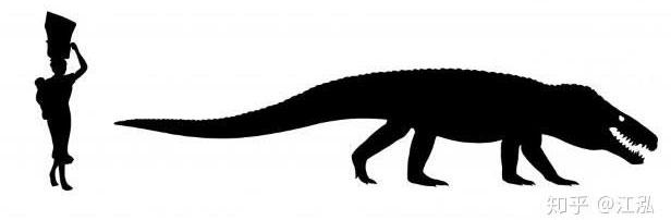 Loài cá sấu tiền sử này sở hữu một cái đầu to, cao với lỗ mũi hướng về phía trước