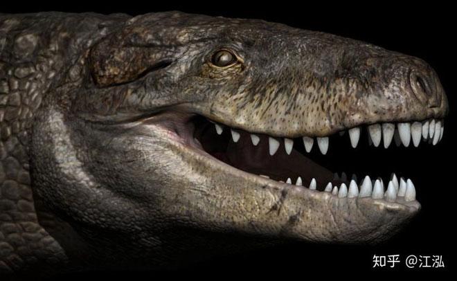 Loài cá sấu cổ đại này còn sở hữu một thân hình to lớn tương đương như những chiếc xe tải.