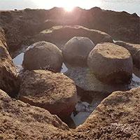 Phát hiện hóa thạch thú có mai 20.000 năm tuổi
