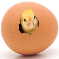 Những điều thú vị về quả trứng
