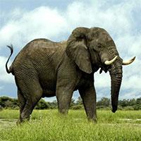 Vì sao hầu hết động vật đại tiện đều mất khoảng 12 giây?