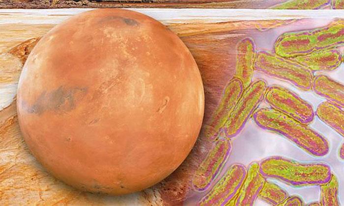 Con người cần chuẩn bị cho tình huống mẫu vật lấy từ sao Hỏa mang mầm bệnh mới.