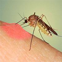 Tại sao bị muỗi đốt lại sưng và ngứa rất lâu?