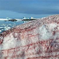 """Nam Cực bất ngờ xuất hiện """"tuyết dưa hấu"""""""