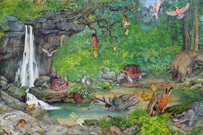 Hình minh họa về khu vực hóa thạch Riversleigh vào 18 triệu năm trước.