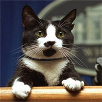 Vì sao mèo nhà có bàn chân màu trắng?