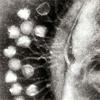 """Khoa học phát hiện ra những con virus khổng lồ với khả năng """"ăn cắp"""" đặc tính loài khác"""
