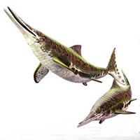 Các nhà cổ sinh vật học phát hiện ra chất béo trên cơ thể của thằn lằn cá từ 180 triệu năm trước