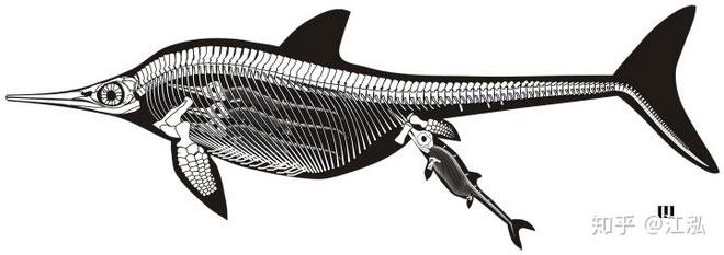 Hình vẽ khôi phục lại hệ thống khung xương của thằn lằn cá cánh hẹp.