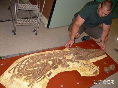 Hóa thạch của loài thằn lằn cá luôn có một khoảng trống giữ xương và lớp biểu bì ngoài cơ bắp