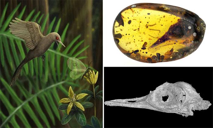 Hình ảnh phục dựng loài khủng long nhỏ nhất dựa trên hóa thạch hộp sọ.