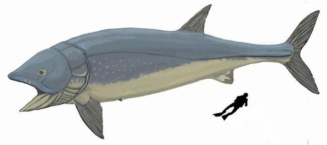 Cá Leeds là một loài ăn lọc