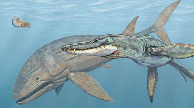 Cá Leeds sinh sống cách thời đại của chúng ta 160 triệu năm.