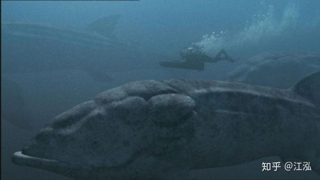 Cá Leeds khổng lồ