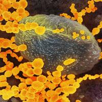 Hệ miễn dịch chiến đấu với nCoV như thế nào?