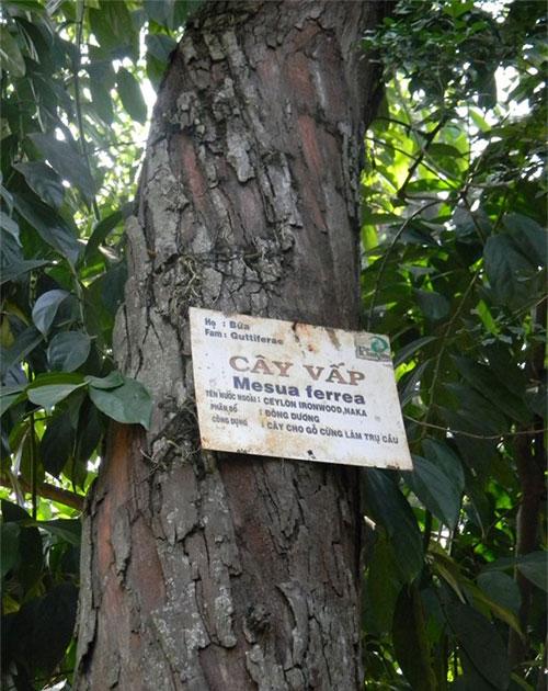 Danh pháp thực vật đã xuất hiện từ năm 1753