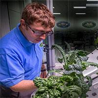 Rau trồng ngoài không gian có vị thế nào?