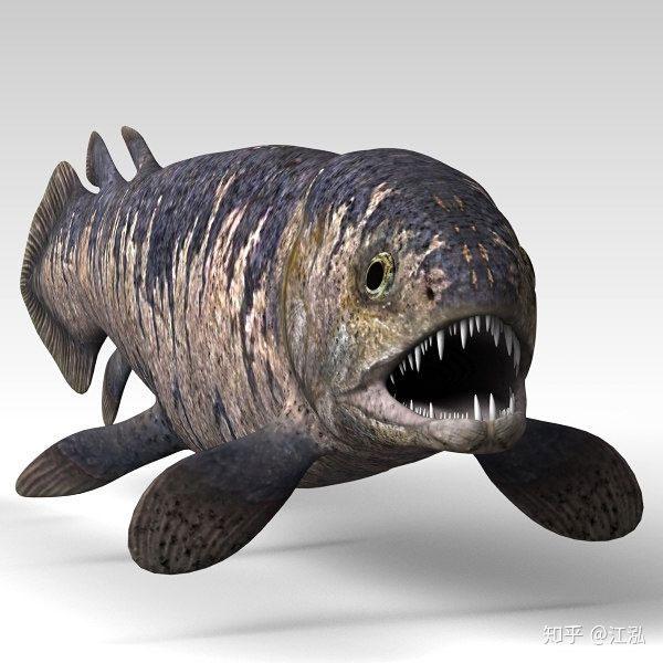 Rhizodus hibberti có một cái miệng lớn dưới mắt chứa đầy răng sắc nhọn và cong.