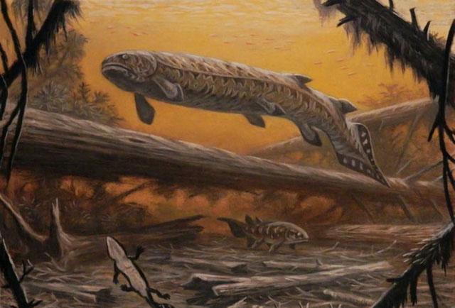 Rhizodus hibberti, chúng tấn công tất cả các loài động vật xuất hiện trong tầm nhìn của chúng