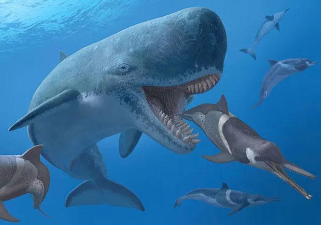 Siêu cá voi Livyatan Melvillei là sinh vật hiếm hoi có thể đối đầu trực tiếp với siêu cá mập Megalodon.
