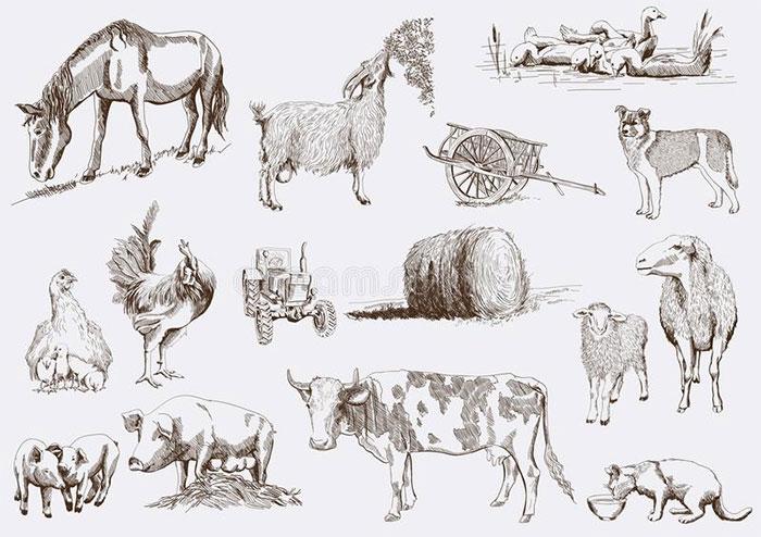 Động vật được chọn để thuần hóa