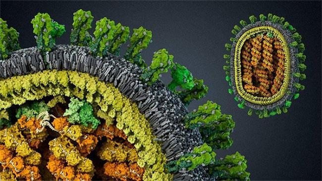 Hình ảnh của một virus