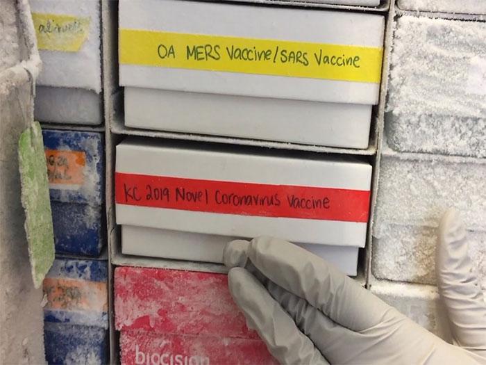 Một mẫu vắc xin đang thử nghiệm chống virus corona mới được đưa trở lại tủ đông.