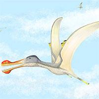 Phát hiện ba loài thằn lằn bay có răng lớn