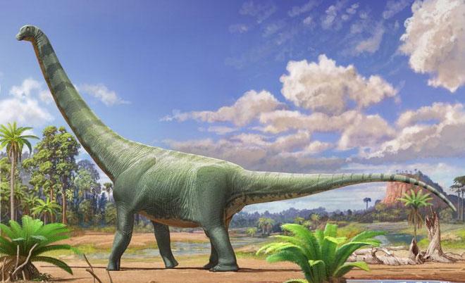 Hình ảnh của loài khủng long Patagotitan sau khi được phục hồi.
