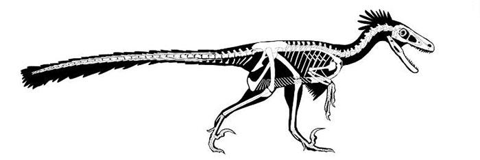 Cấu trúc xương của D. notohesperus.