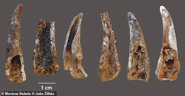 Phần còn lại của bữa ăn giàu hải sản đặc biệt của nhóm Neanderthals ven bển Bồ Đào Nha