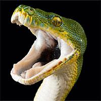 Nọc rắn có thể ra đời để tấn công kẻ thù chứ không phải để tự vệ