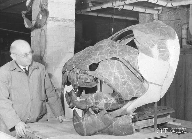 Hộp sọ khổng lồ của cá Dunkleosteus.