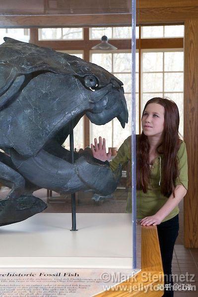 Loài sinh vật khủng khiếp này là loài cá lớn nhất đại dương trong kỷ Devon.