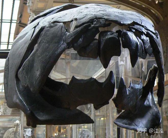 Khuôn mặt của cá Dun rất ấn tượng với hình dáng của hộp sọ và răng cực kì đáng sợ.