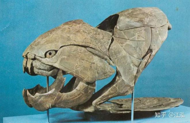 Trên thực tế loài cá này không hề có răng.