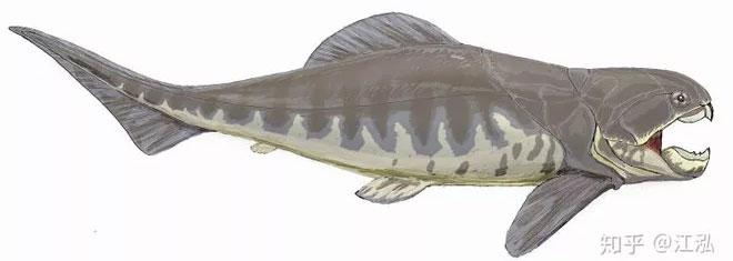 Dunkleosteus vẫn được coi là một trong những động vật có xương sống có hàm sớm nhất trong lịch sử Trái đất.