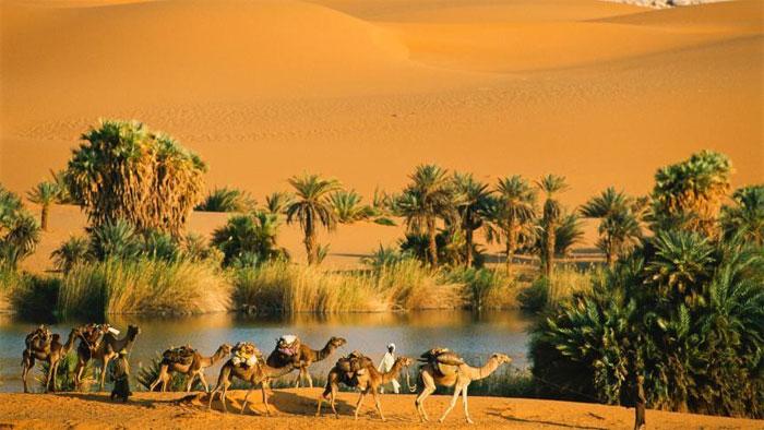 Ốc đảo đóng vai trò là trung tâm cho các hoạt động kinh tế trong sa mạc.